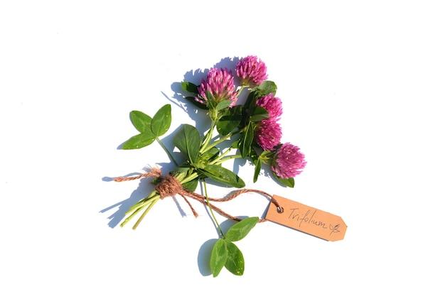 Buquê de trevo vermelho (trifolium pratense) em uma superfície branca. uma etiqueta indica o nome da planta