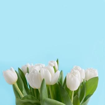 Buquê de tulipa branca em azul. espaço para texto.