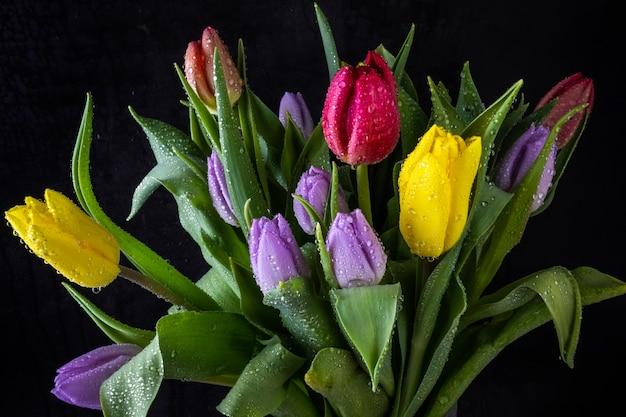 Buquê de tulipa multicolorida em gotas de água sobre um fundo escuro