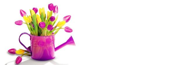 Buquê de tulipas coloridas em um regador. conceito de primavera e jardinagem.