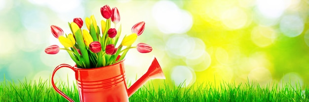 Buquê de tulipas coloridas em um regador.