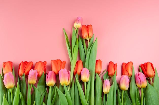 Buquê de tulipas de primavera em uma superfície rosa