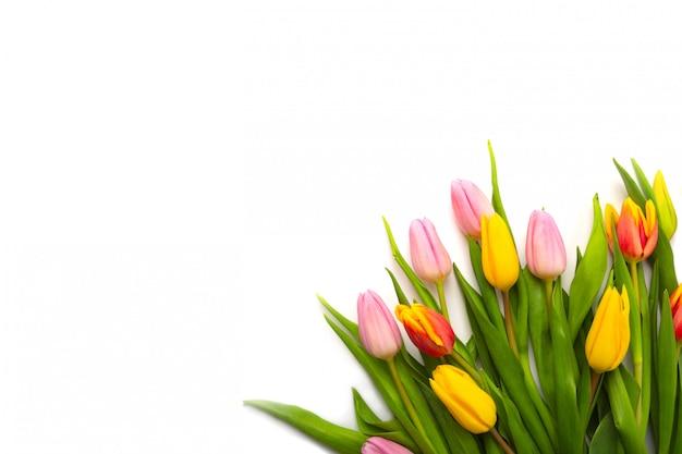 Buquê de tulipas em fundo branco. configuração plana, vista superior com copyspace isolado no branco.