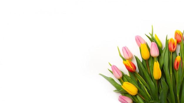 Buquê de tulipas em um fundo laranja. configuração plana, vista superior com copyspace isolado no branco.