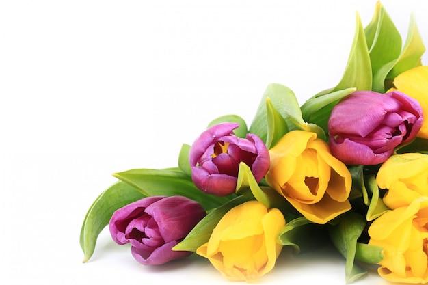 Buquê de tulipas isolado no fundo branco