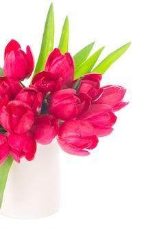 Buquê de tulipas rosa isoladas em branco