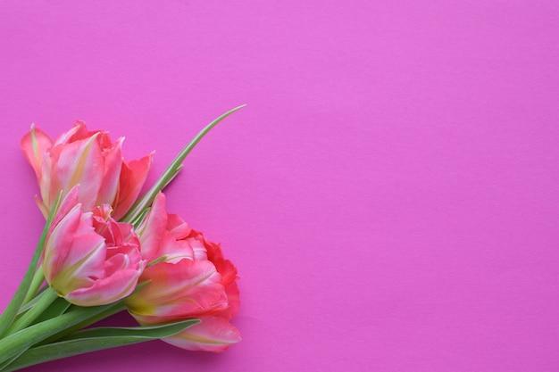 Buquê de tulipas rosa primavera em uma parede rosa. estilo simples de vista superior.