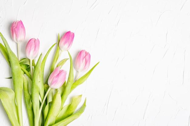 Buquê de tulipas rosa suaves em fundo de gesso branco