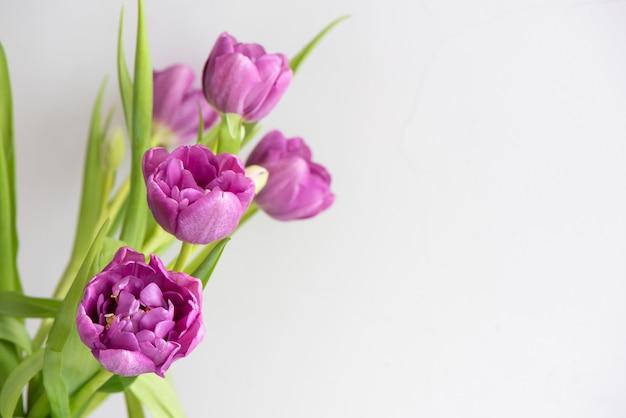 Buquê de tulipas roxas cor de rosa sobre um fundo claro. cartão de férias.