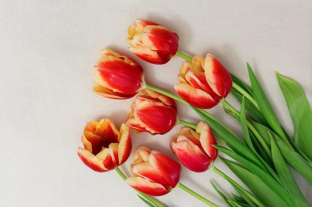 Buquê de tulipas vermelhas, deitado sobre uma superfície de luz. vista do topo. copie o espaço. lugar livre para o seu texto. formato horizontal. cortar flores.