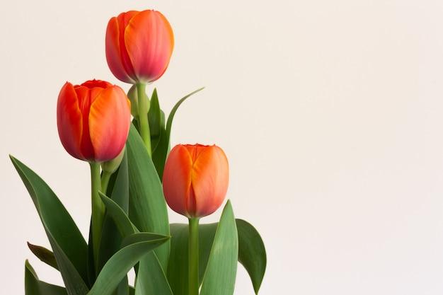 Buquê de tulipas vermelhas em bege Foto Premium