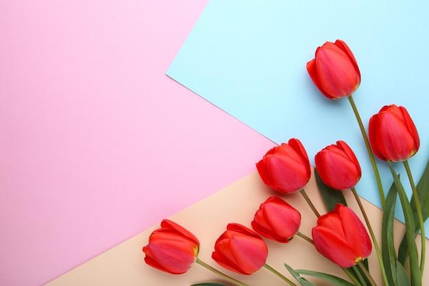Buquê de tulipas vermelhas em fundo colorido
