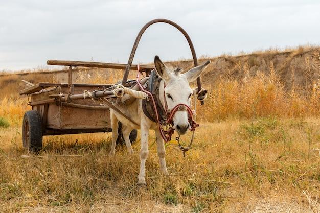 Burro com um carrinho no campo, burro no prado do rio