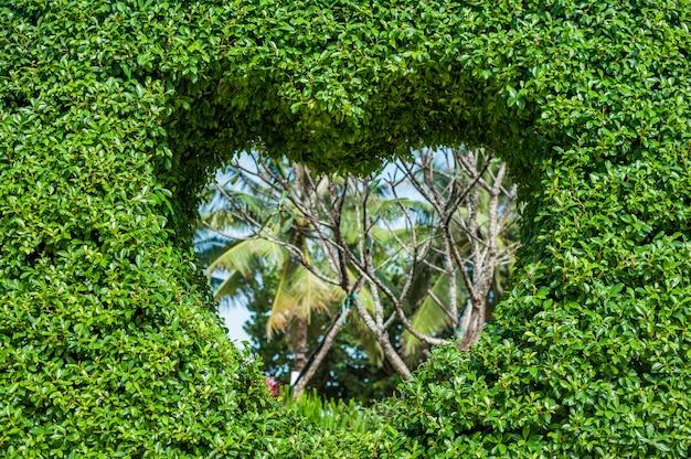 Bush com um buraco em forma de coração. conceito de amor. Foto Premium