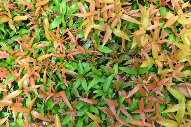Bush verde. fundo sem emenda da textura.