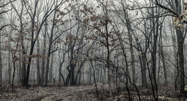 Bw preto e branco manhã na floresta de outono vivas floresta de outono folhagem