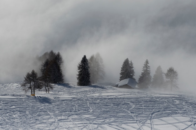 Cabana e árvores na neblina