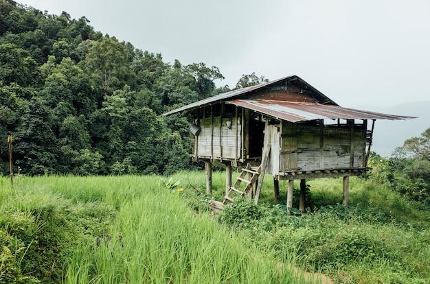 Cabana no campo de arroz na tailândia