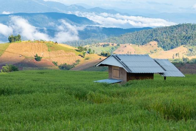 Cabana pequena em um campo de arroz verde no vale