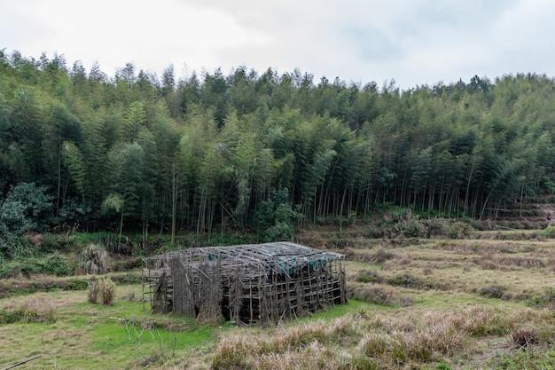 Cabanas abandonadas em floresta de bambu verde