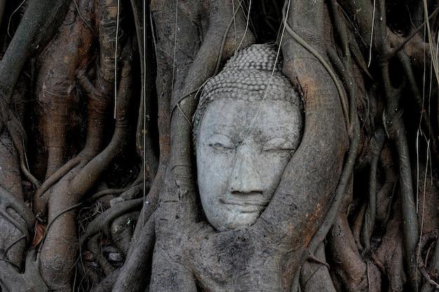 Cabeça de buda coberta de figueira no parque histórico wat mahathat ayutthaya