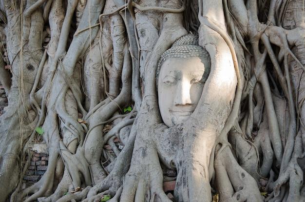 Cabeça de buda coberta de raízes de árvores em ayutthaya, tailândia, wat mahathat