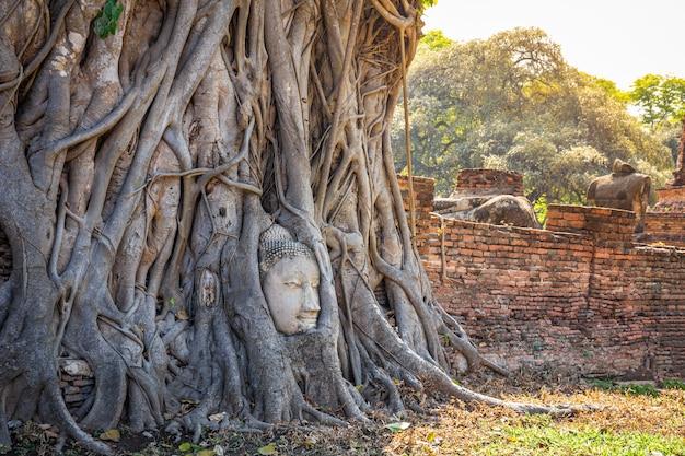 Cabeça de buda em raízes de árvore no templo de wat mahathat ayutthaya tailândia