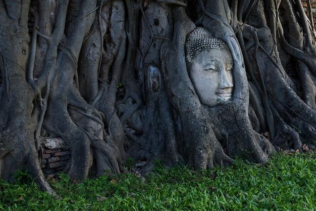 Cabeça de buda embutida em uma árvore banyan. templos tailandeses antigos na tailândia. tailândia incrível