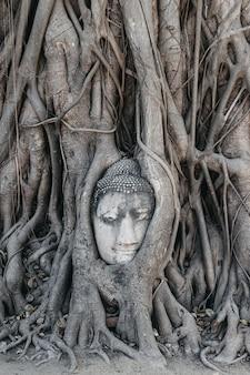 Cabeça de buda nas raízes das árvores. wat mahathat ayutthaya. tailândia.