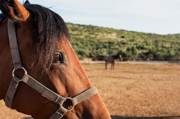 Cabeça de cavalo close-up com fundo desfocado
