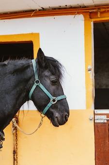 Cabeça de cavalo no estábulo