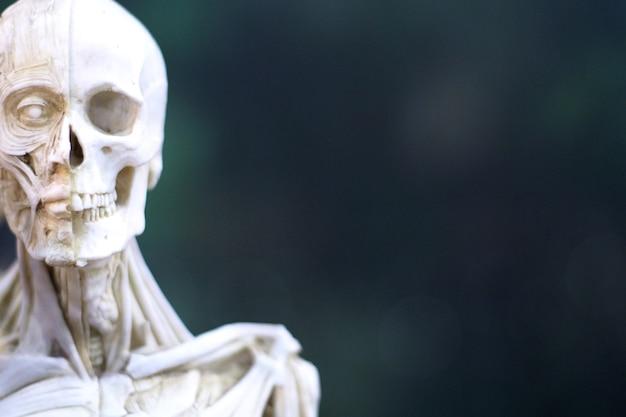 Cabeça de caveira de réplica de resina de halloween decoração gótica