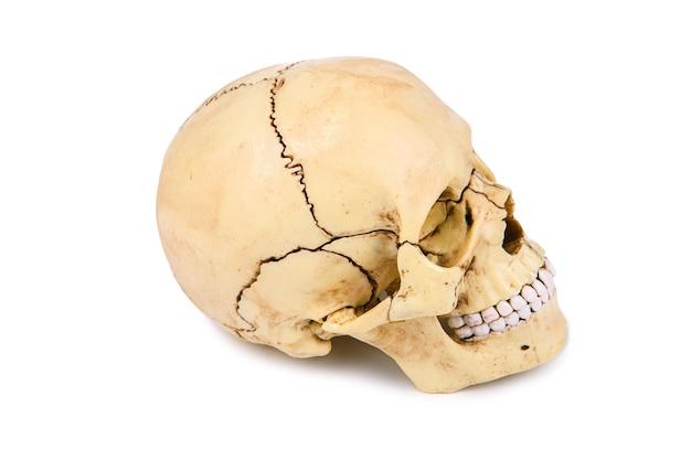 Cabeça de crânio humano isolada em fundo branco