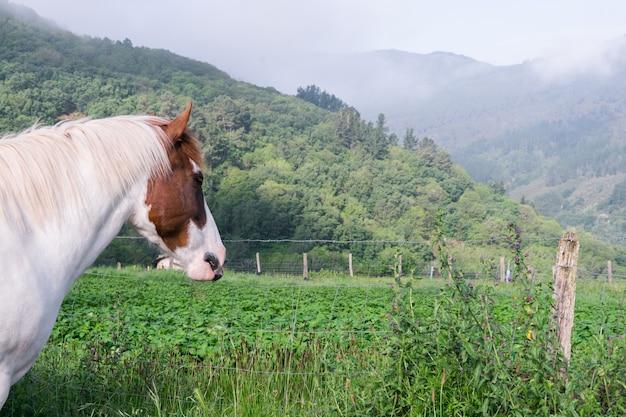Cabeça de égua bicolor na natureza. animais domésticos.