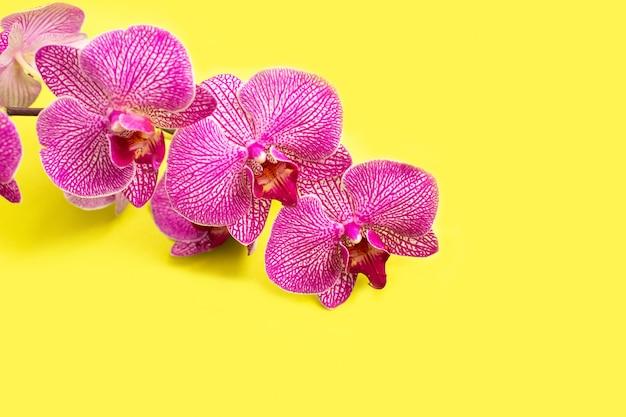 Cabeça de flor delicada bonita da orquídea na parede amarela.