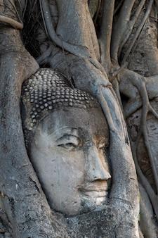 Cabeça de phra buda presa a uma árvore, ayutthaya