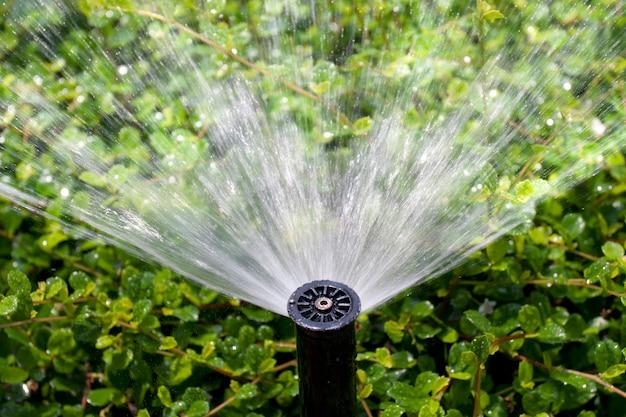 Cabeça do aspersor regando o arbusto e a grama