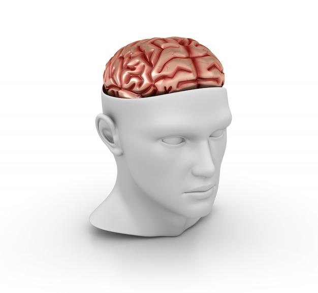 Cabeça humana dos desenhos animados 3d com cérebro