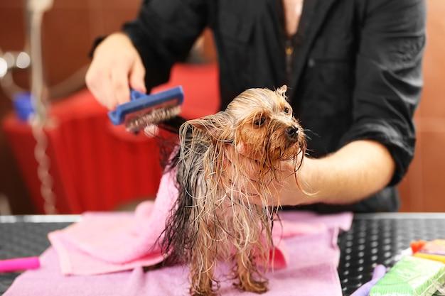 Cabeleireiro canino cuidando de cachorro yorkshire em salão de beleza