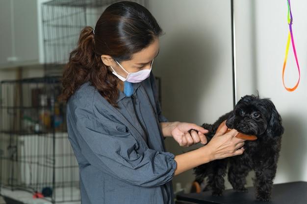 Cabeleireiro feminino cortar o cabelo do cão pequeno em um salão de beleza no salão de beleza para cães