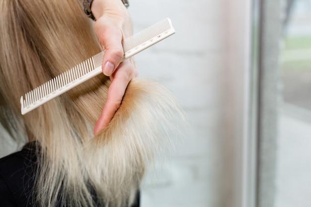 Cabeleireiro feminino fazendo corte de cabelo no cabelo loiro. restauração de queratina, corte de cabelo, pontas encurtadas serviço de cabeleireiro.