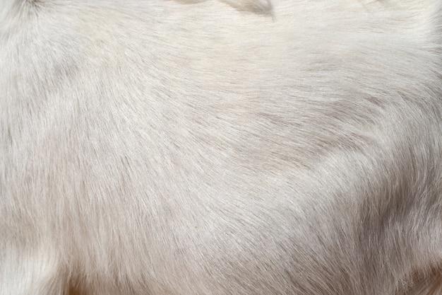 Cabelos brancos de cabra.