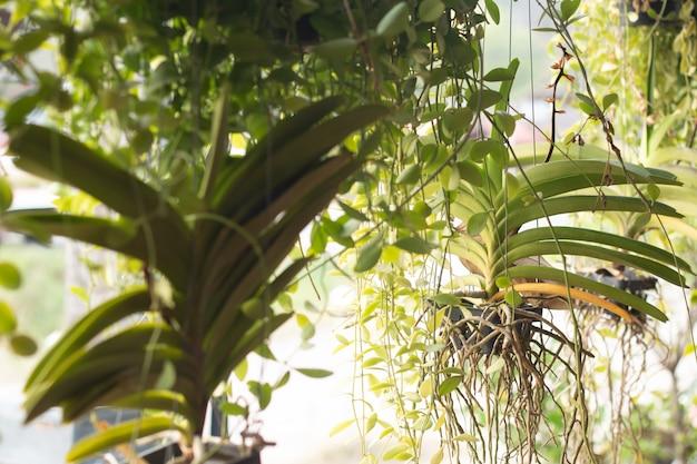 Cabides decorativos de plantas de macramé no restaurante