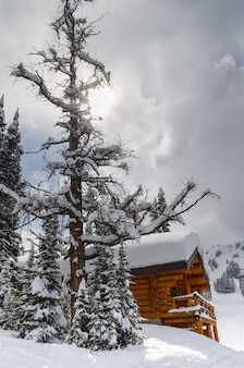 Cabine na neve cercada por evergreens nas montanhas rochosas do parque nacional de banff c