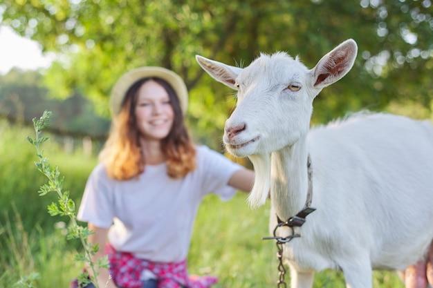 Cabra branca de fazenda doméstica no gramado com amizade entre adolescente, garota e animal