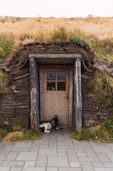 Cabra preta e branca deitada ao pé de uma porta de uma antiga estrutura na islândia com telhado de grama