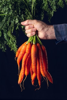Cacho de cenouras frescas sem limpeza, seguradas pela mão de um fazendeiro.