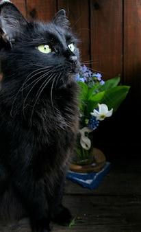 Cacho de flores, gato preto de primavera