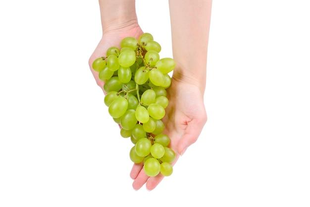 Cacho de uva branco em mãos isoladas em branco