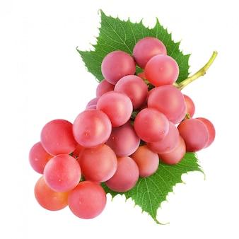 Cacho de uva vermelha com folhas isoladas